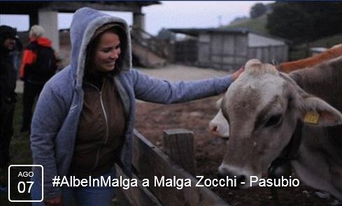 Albe in Malga a Malga Zocchi